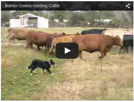 Click To Watch On Running A Cattle Ranch