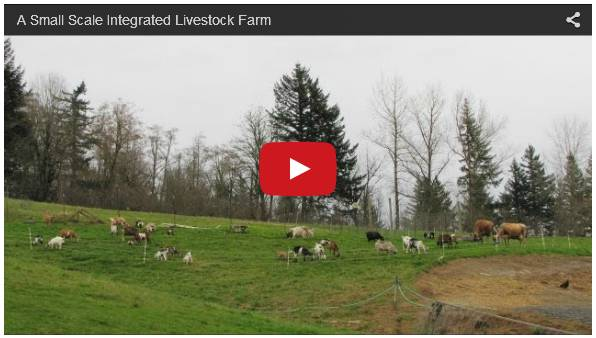 Click To Watch Video Guide To Cattle Farming