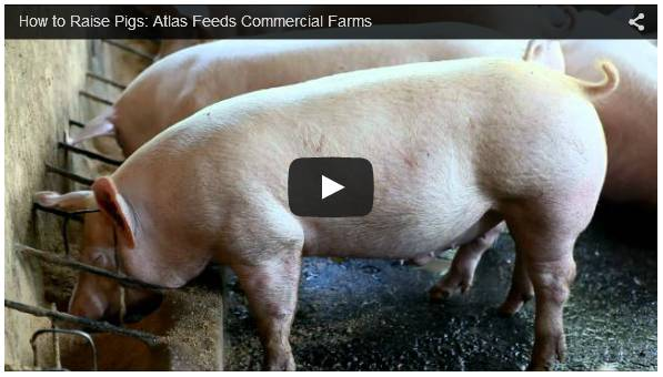 Pork farming business plan