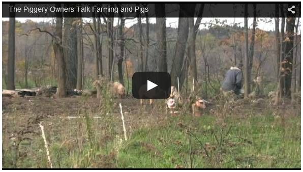 Click To Watch Pig Farming Business