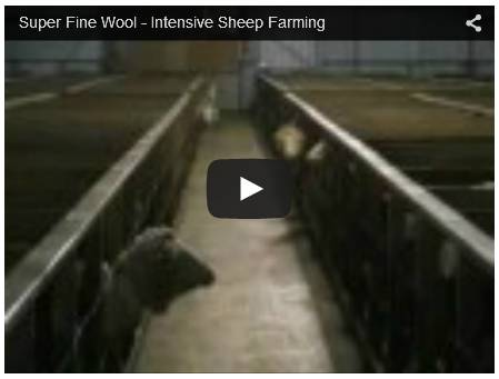 Click To Watch Video On Intensive Sheep Farming