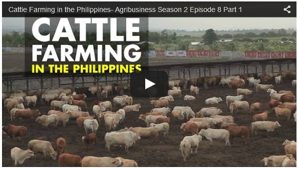 Click To Watch Video On Profitable Cattle Farming