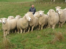 Intensive Sheep Farming