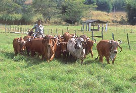 Step By Step Guide To Livestock Farming